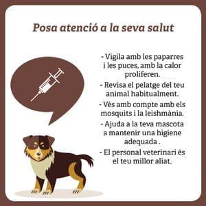 salut del teu gos