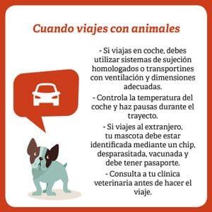 cuando viajes con animales
