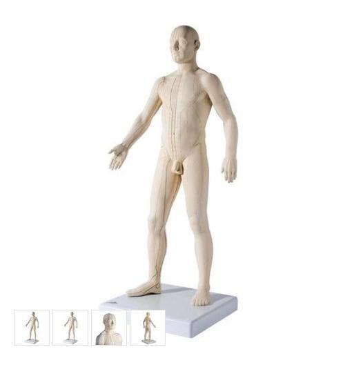 Model d'acupuntura