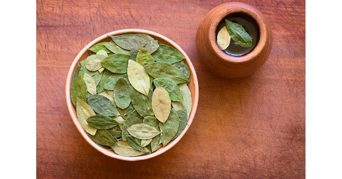 Properties and benefits of coca leaf