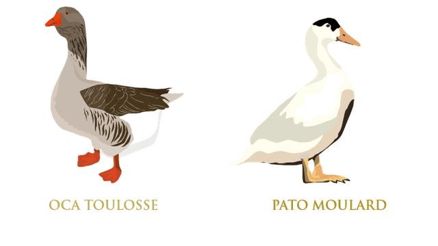 Aves palmípedas para la elaboración del Foie gras