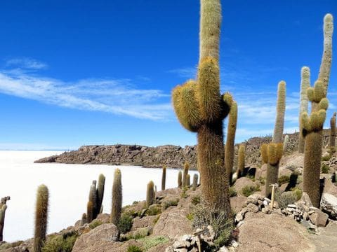 Isla de Incahuasi-Salar de Uyuni