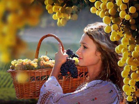 Cultura del vino moldava