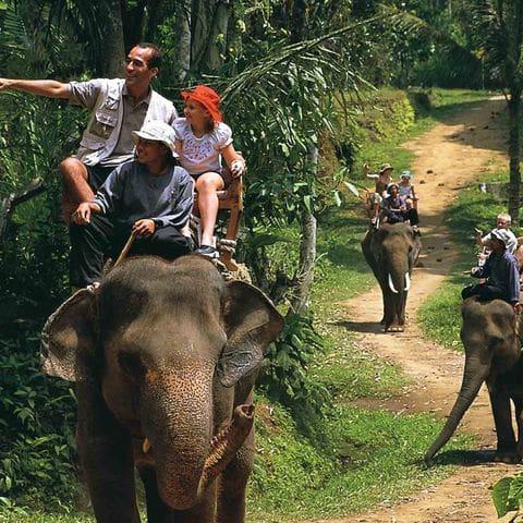 Aunque son originarios de Sumatra también paseos en elefante