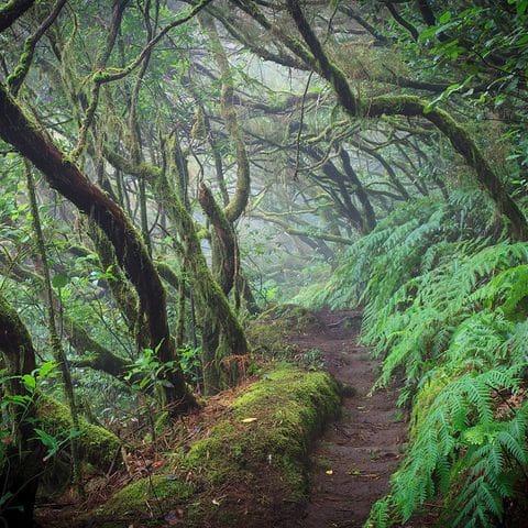 Bosque húmedo de Anaga