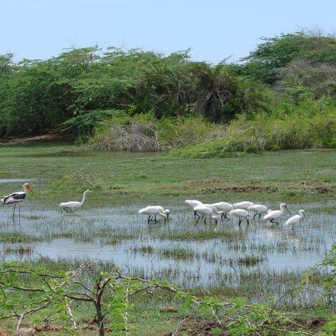 Parc Nacional de Bundala
