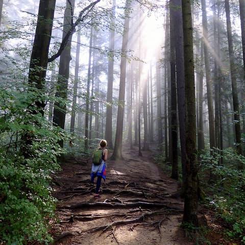 Senderismo al Parque Nacional de Ceahlău