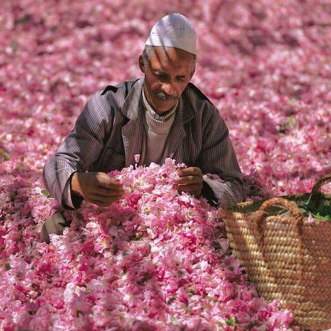 Festival de las rosas