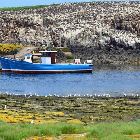 Isla de Staple