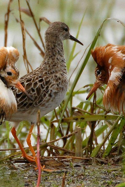 Viajes ornitológicos