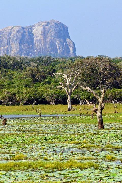 Parc Nacional de Yala