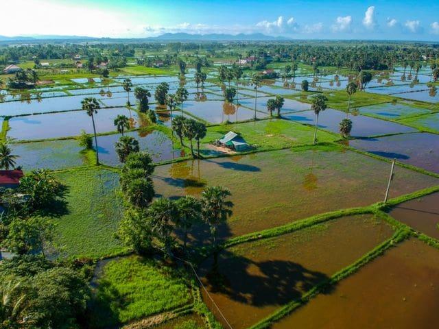 Arrozales en Kampot