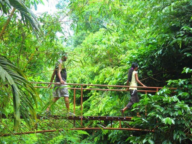 Bosc humit de Kitulgala
