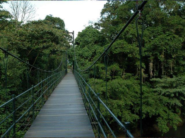 Estación Biológica de La Selva