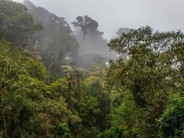 Parc Nacional Los Quetzales