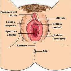 Happens. can anatomia del clitoris pity