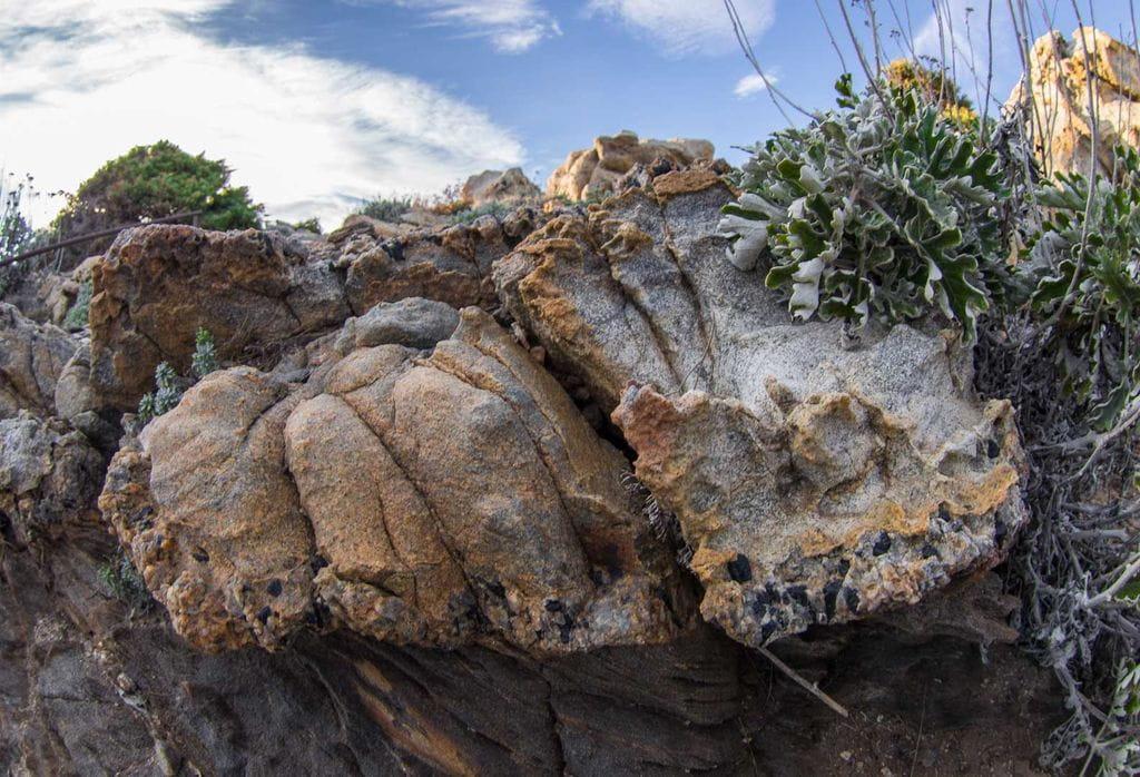 Site naturel de tudela reserve intgrale du parc naturel for Desherbant naturel grande surface