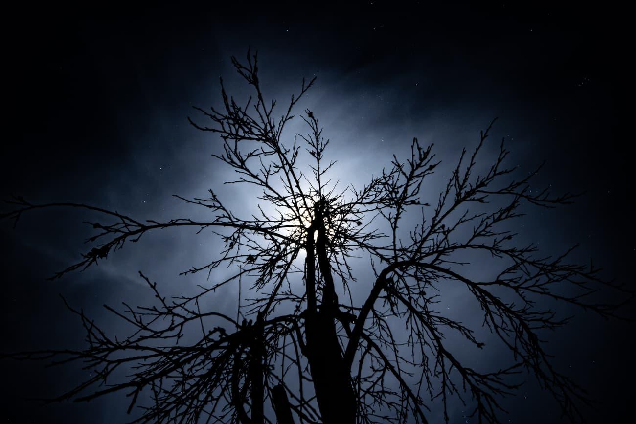 Full Moon Halo under a plum tree. Lliurona. Alta Garrotxa. Kilian Vindel   -  Irix Firefly 15mm f/2.4 2