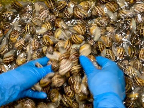 Cleaning of snails