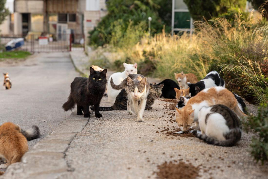 Gats del carrer