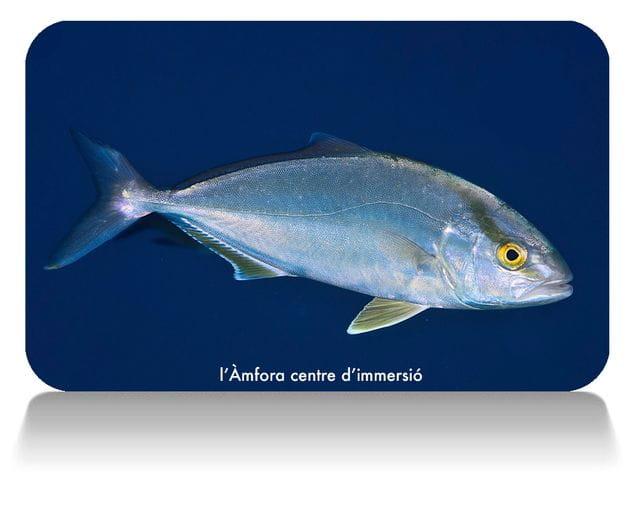 Cursos de biología marina, curso peces del Mediterráneo