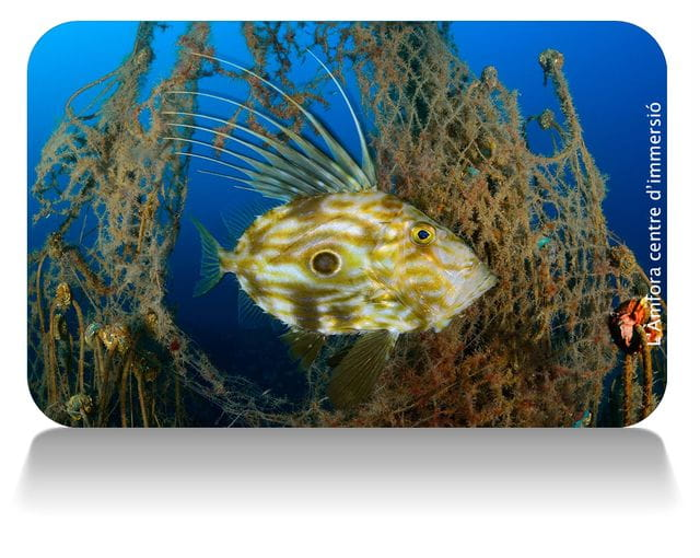 Buceo en Tossa de Mar pez de san Pedro, Costa Brava