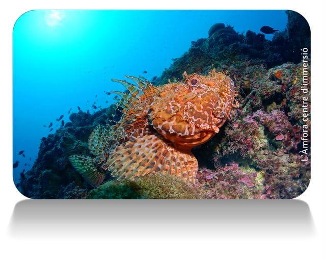 Buceo en la isla de Tossa de Mar, Costa Brava