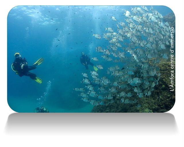 Rutas submarinas en Tossa de Mar, Costa Brava