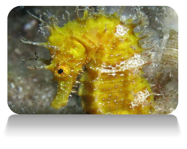 Curso caballitos de mar en Tossa de Mar, Costa Brava