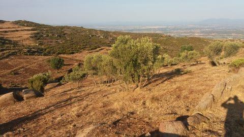 Plantació d'arbres