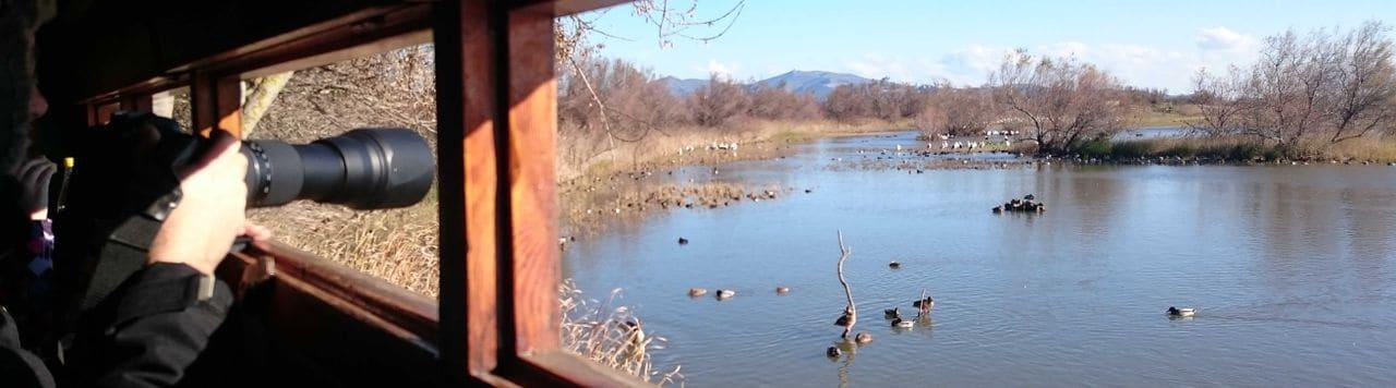 Aguait a la llacuna d'El Cortalet.