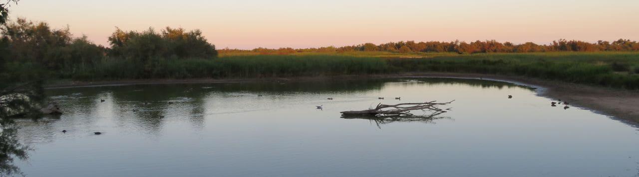 Quan es lleva el dia a l'estany del Cortalet els ocells també es dispose a gaudir, lentament, de la tranquil·litat del parc natural.