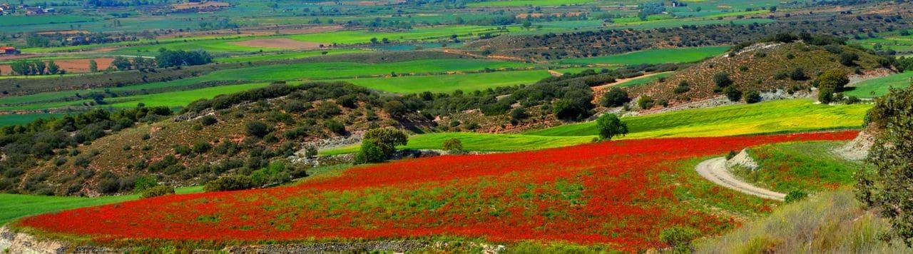 El secà de Bellmunt a principis de primavera.