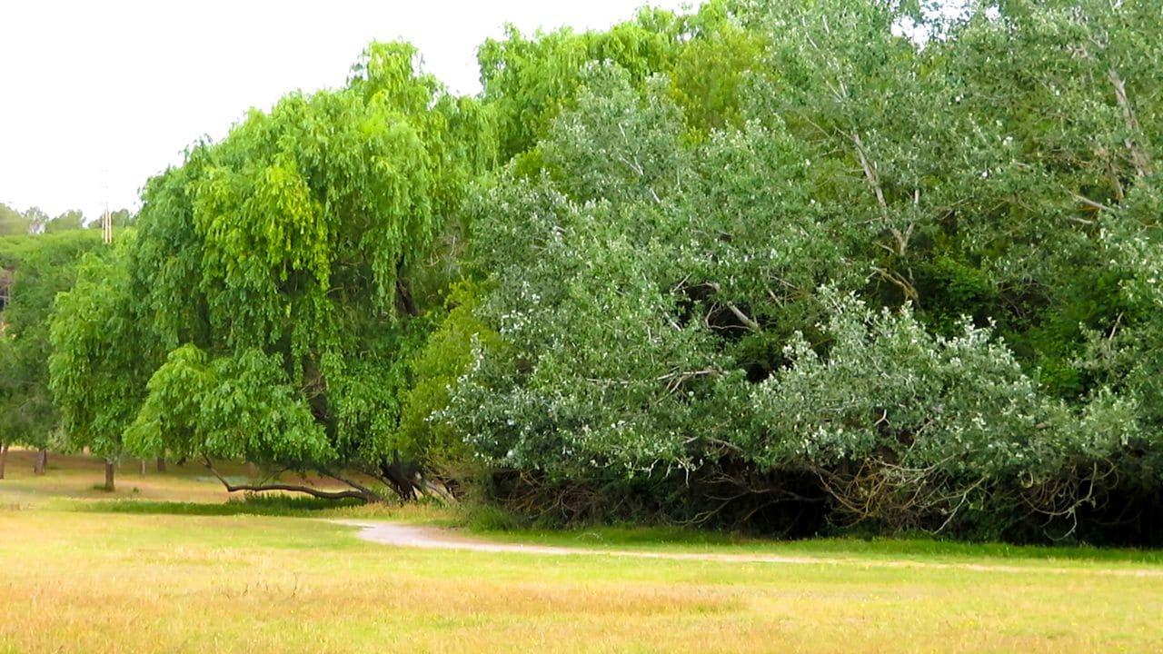 Un rierol envoltat d'un consolidat bosc de ribera atrau ocells amants de l'espessura.