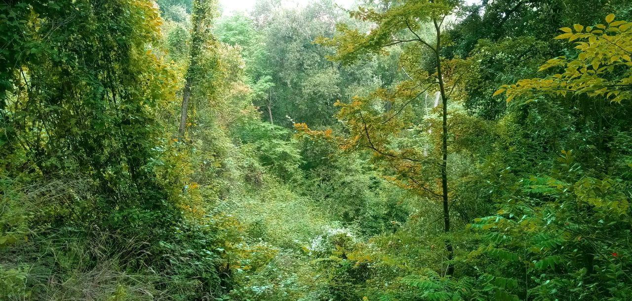 L'espès bosc del Fondal és hàbitat ideal per espècies molt forestals. Escoltarem més que no veurem. Esmoleu les orelles!