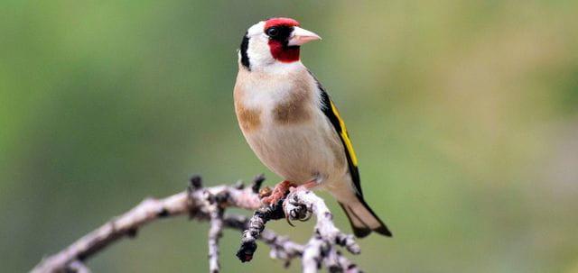"""En aquest curs veuràs que molts ocells que veus tot l'any no són tan """"locals"""" com et penses."""