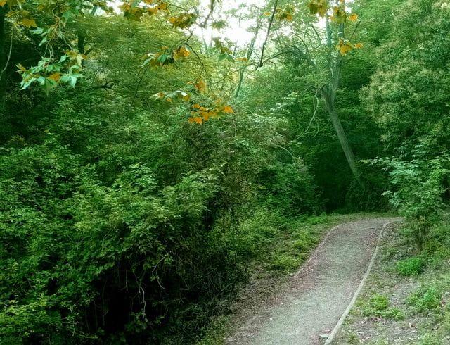 Seguirem el recorregut del Fondal, un espai molt forestal.