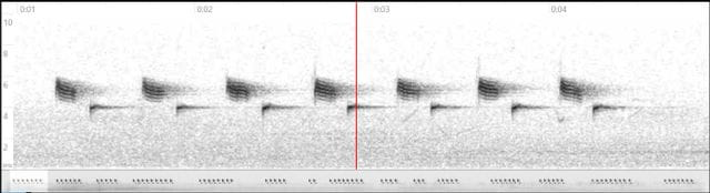 """Espectrograma del monòton """"tot estiu... tot estiu..."""" de la mallerenga carbonera-"""