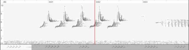 L'espectrograma del cant de la mallerenga petita, que al principi el confons amb la carbonera, permet veure les diferències i saber on afinar l'orella. És més fàcil que no sembla!