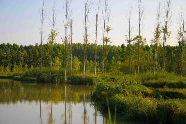 Aigua i boscos es combinen per formar un hàbitat molt biodivers a Sils.