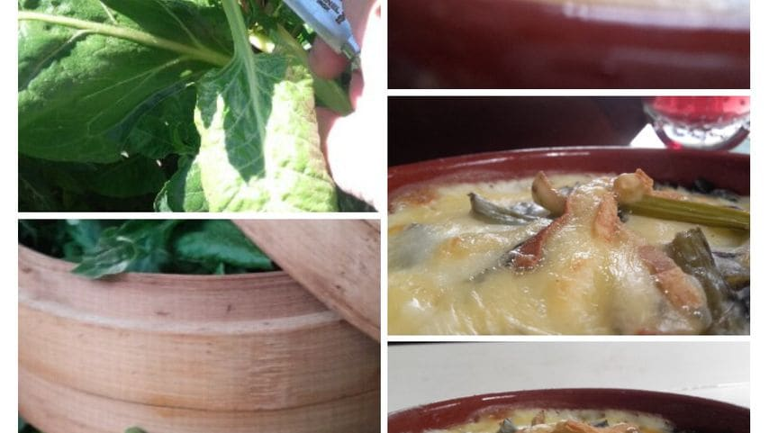 Beta maritima / Alcega: vapor / bechamel + queso raclette gratinado.