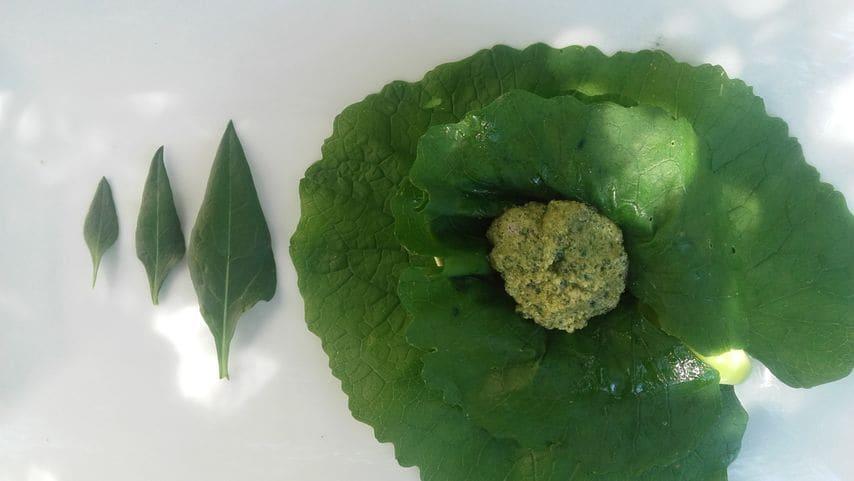Pesto de Beta vulgaris  silvestre.