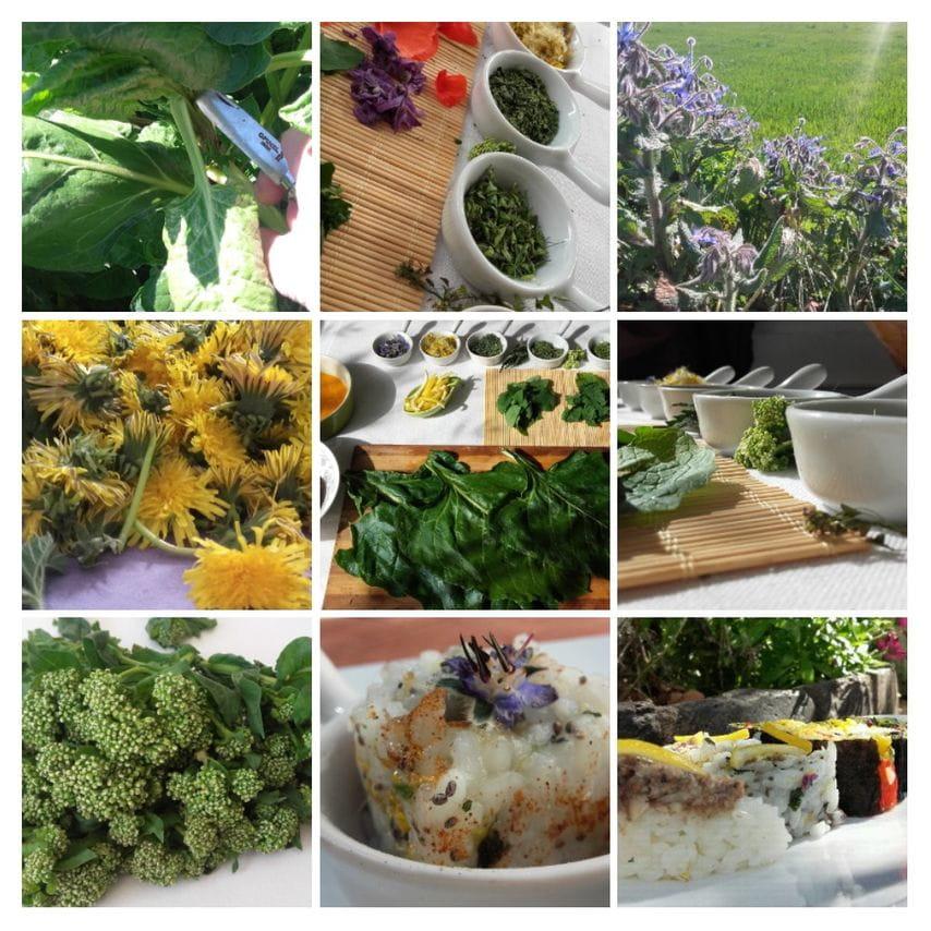 Sushi aux plantes sauvages