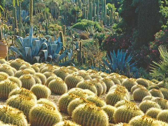 Jardines de Pinya de Rosa, Blanes
