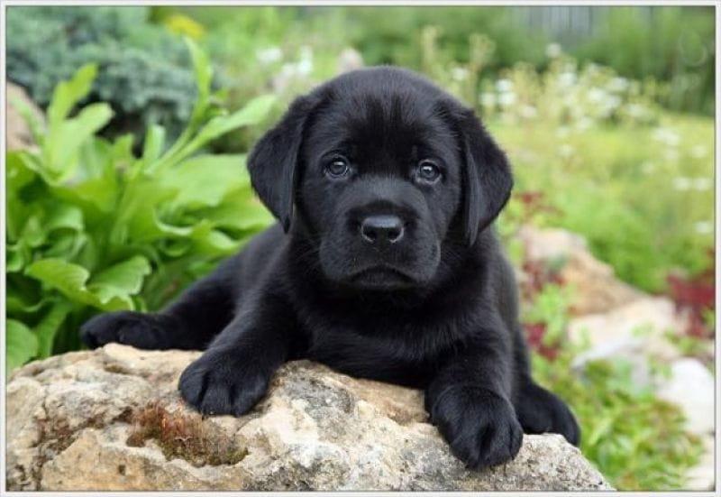 Как защитить собаку или кошку от укусов клещей Что делать