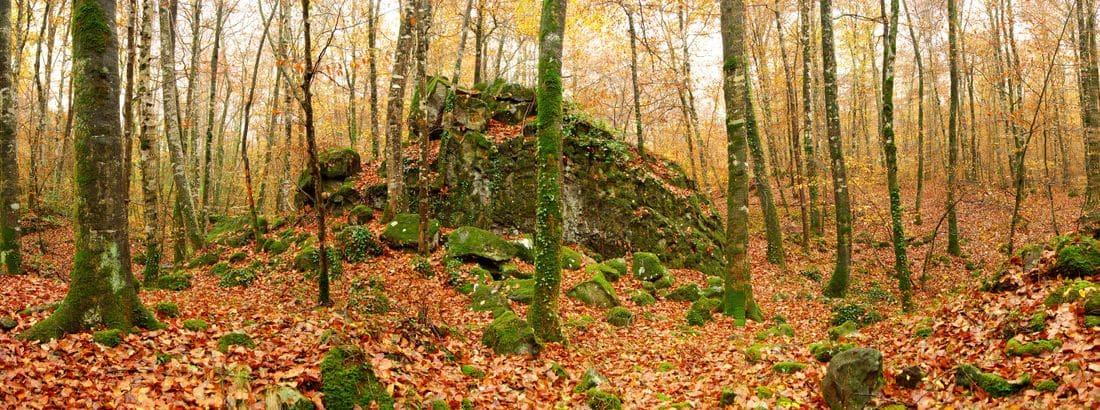 Un bosc amb encant.