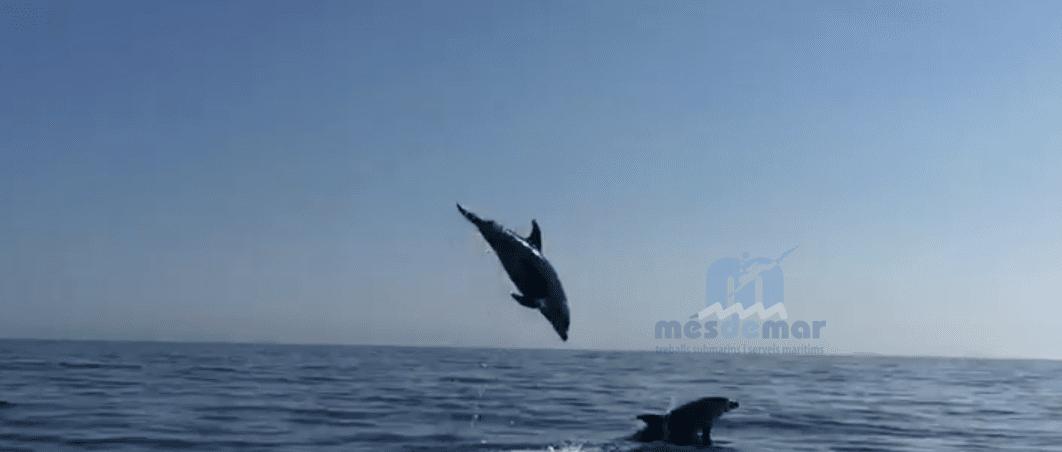 Delfines avistados por Mésdemar
