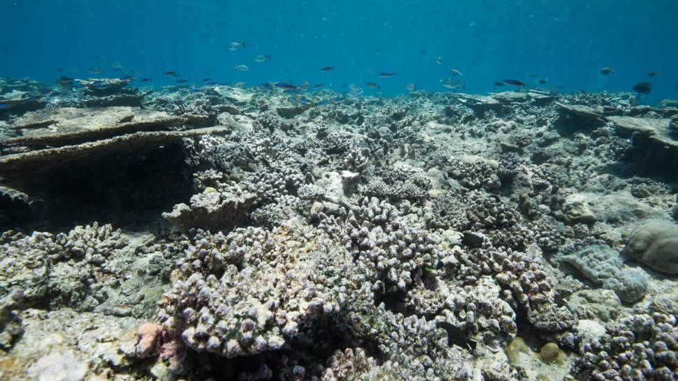 Esculls de corall en aigües poc profundes morts pel blanqueig de corall, una malaltia relacionada amb el canvi climàtic. (Foto: Atolón Gaafu Alif a les Maldives)