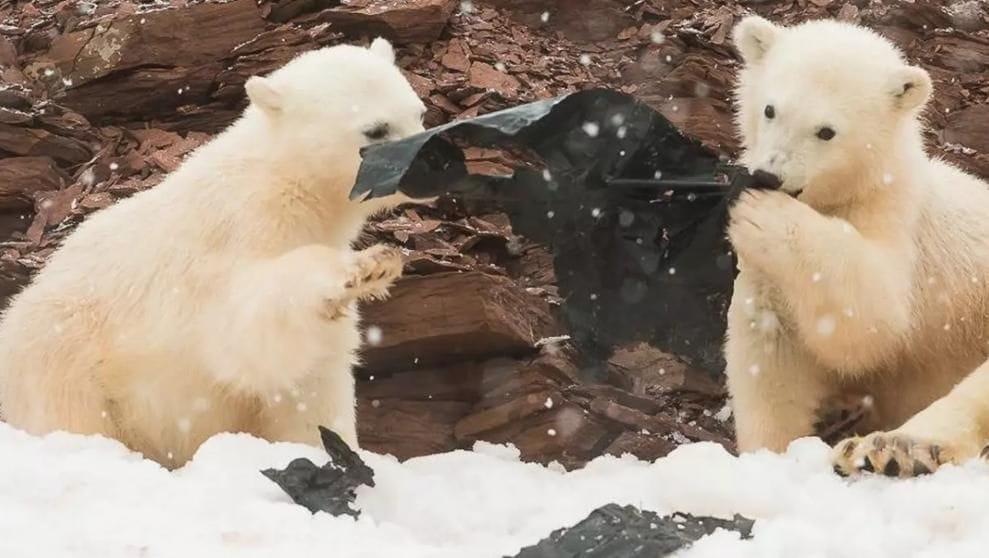 La presència de plàstics a l'Àrtic es un si símptoma del problema global dels residus (Kevin Morgans / SWNS.com)