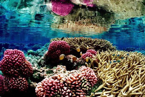 Los arrecifes de coral reducen a la mitad los daños de las inundaciones